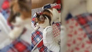 Кошка - доктор ЮМОР. СМЕШНОЕ ПРО КОШЕК. ВИДЕО ПРИКОЛЫ ПРО КОТОВ И КОШЕК