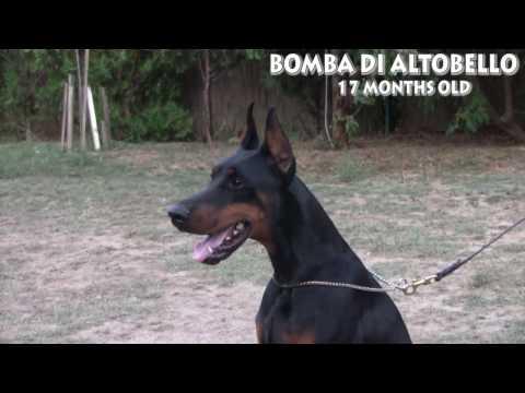 Bomba di Altobello-video presentation