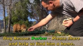 Dog Rescue Mission: Parker.  Please share and help us find his forever home.