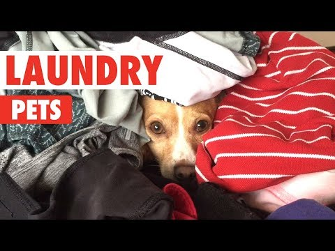 Laundry Day Pets | Funny Pet Compilation 2017