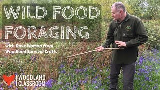 Wild Food Foraging (with Dave Watson)