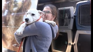 Pets rescued from hurricane zones need new homes