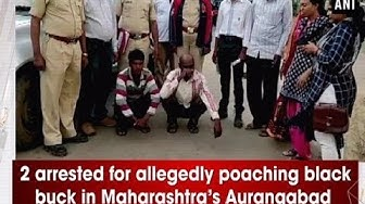 2 arrested for allegedly poaching black buck in Maharashtra's Aurangabad