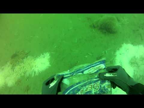 Stillwater Cove / Breakwater Freedive Scuba