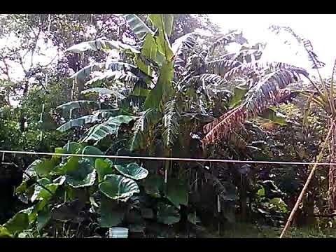 Lluvia en Tres Zapotes 2017-07-11