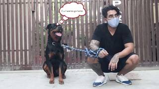 Aggressive or not ?Sultan Rottweiler Training in hindi Session Part 1