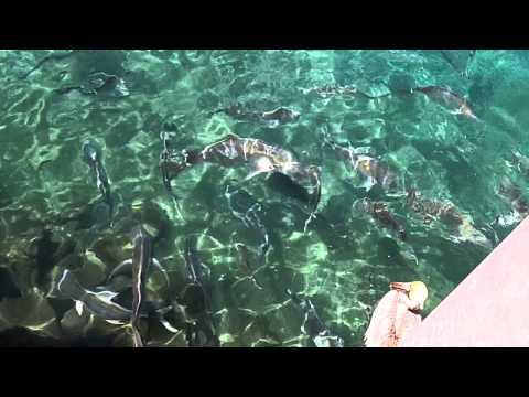 Nice Catch At Sailfish Marina Singer Island Florida