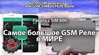 #079 GSM реле Н надо или GSM SIM800 РЕЛЕ Blynk