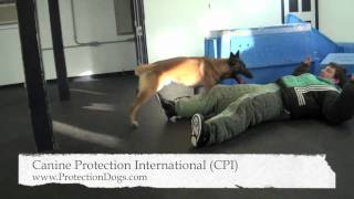 Cpi Protection Dog Training.mov
