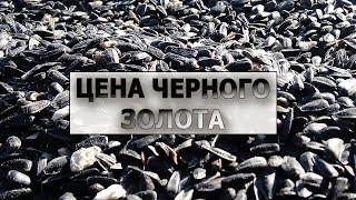 Обвал цен на подсолнух.  Урожай Анастасии.  Итог 2018г.  #СельхозТехникаТВ