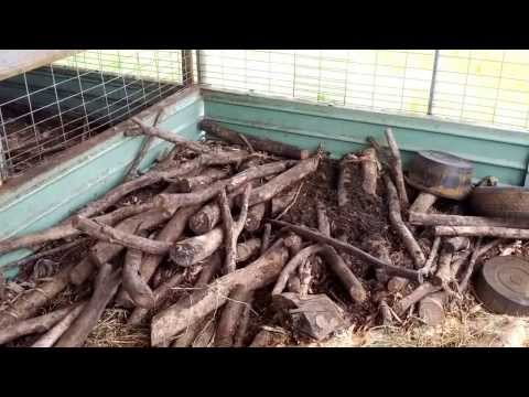 No-Smell Pig Pen, Natural Farming