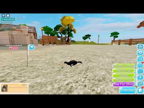 Vida de Lontras