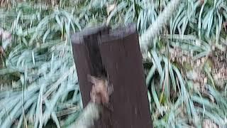 방랑카 용인  한택 식물원2