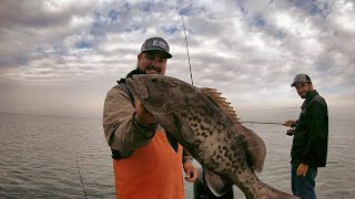Inshore Grouper and Flounder Fishing Tampa Bay