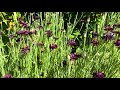 Desert Botanical Garden Blooms - Spring 2020