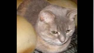Подумал что кот это хлеб
