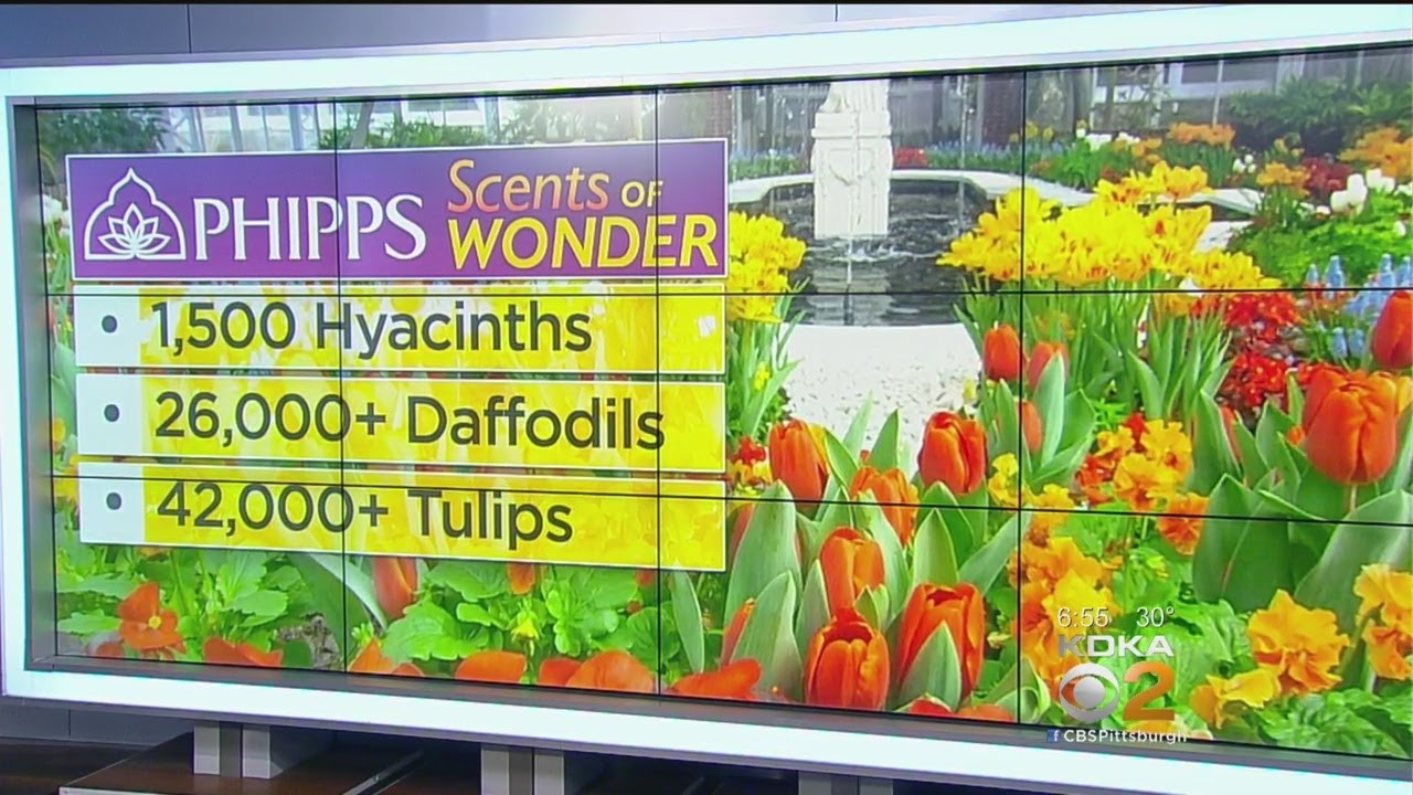 Spring Flower Show Debuting At Phipps Conservatory Youtube