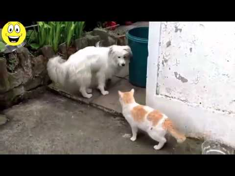 Scared Cats The Best Funny Cat Videos Compilation [25 MINUTES] 2014 Part I HD