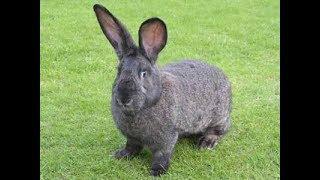 معلومات هامه عن تربيه الارانب Important information about breeding rabbits