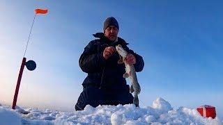 Расставили ЖЕРЛИЦЫ до рассвета и ВОТ ЧТО ВЫШЛО Ловля щуки на жерлицы Рыбалка в заповеднике