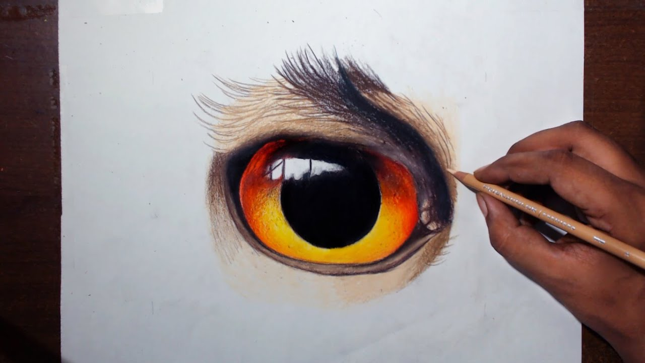 Drawing an owl eye prismacolor pencils