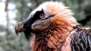 10 Aves De Rapina Mais Letais E Poderosas No Mundo