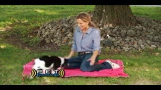 Pet Command Commercial Pet Commander As Seen On Tv Ultimate Dog Training System