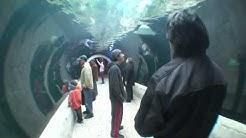 Dallas World Aquarium 2010