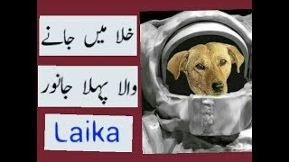 Story of Laika Dog    First Animal in Space    Amazing Story in Urdu/Hindi