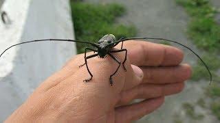 Лютые насекомые, которые жрут наш урожай!