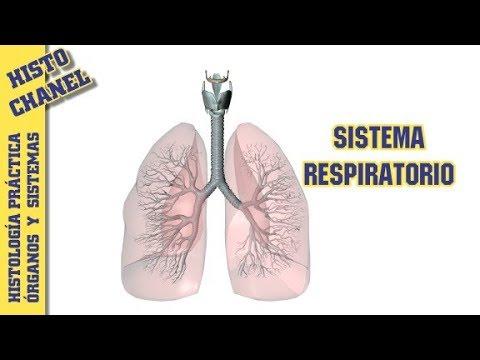 OyS 4.- Sistema respiratorio