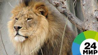 Из зоопарка в секторе Газа спасли 40 истощенных животных - МИР 24