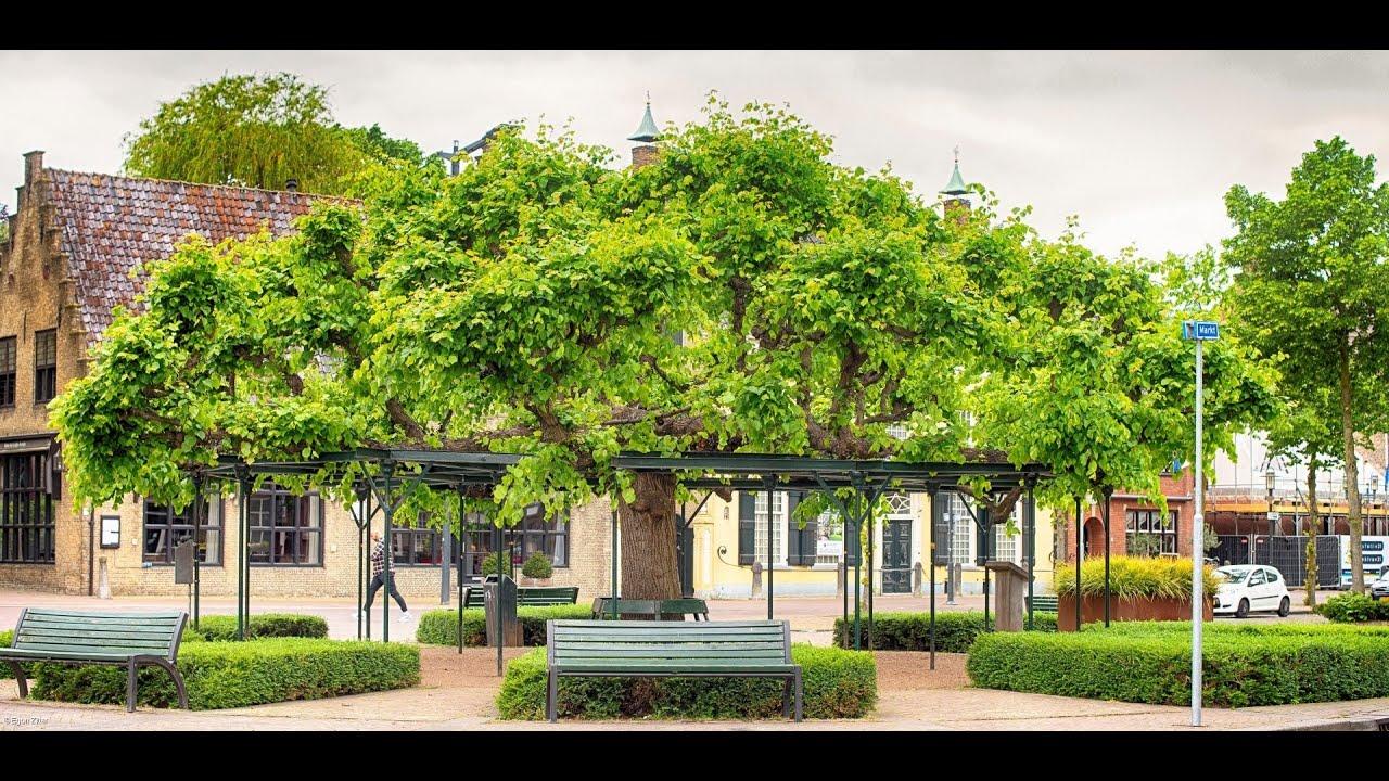 Stem op de Moeierboom