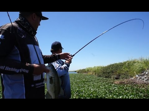 Post Spawn Junk Fishing Ft: Mark Lassagne CA, Delta