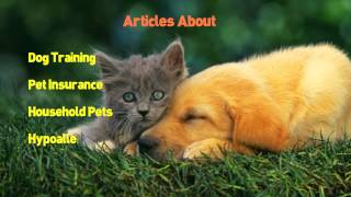 Dog| 1800 Plr |pet| Articles Plus |dog|,|cat|,|dog Health| Ebooks Plus Bonus |videoscribe|
