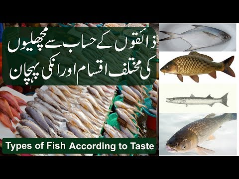 Fish,Types Of Fishes According To Their Taste. Trout, Tilapia, Rohu, Mushka, Grass, Pomfret, Tuna,