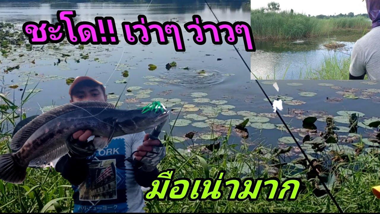 ตกปลาชะโด ในวันที่ มือไม้ อ่อน! รอดตัวก่อนหมดเวลาครับ