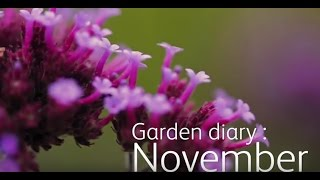Garden Diary: November - Pruning apple trees, plant protection,  bird feed & more