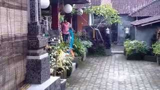 Ojek's Homestay Ubud Bali Indonesia Video Review