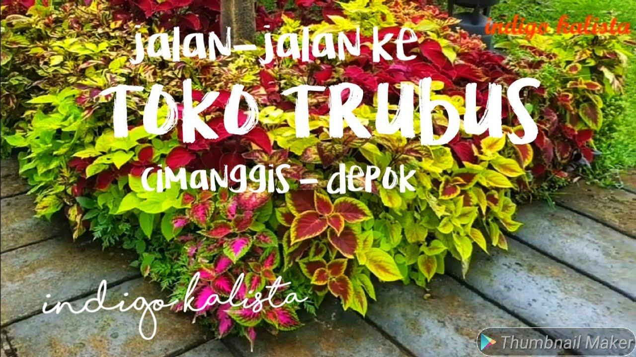 Jalanjalan ke TOKO TRUBUS Cimanggis Depok V025 YouTube