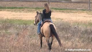 Bull Whip O Tivio - trail riding - Valley View Ranch