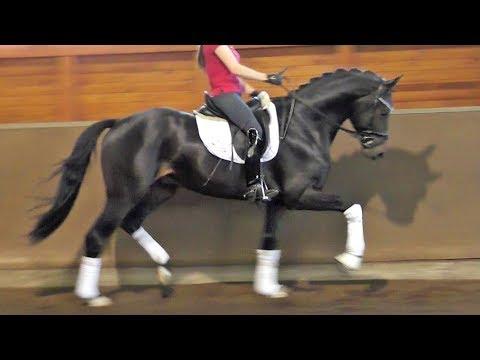 wwwrstall-sandbrink.de *2015 FINEST stallion Dressage