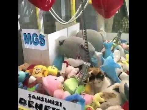 Кошка золезла в