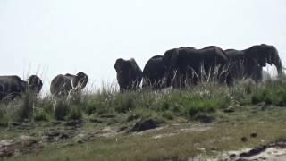 No07 南アフリカ旅行チョベ国立公園ボートサファリ