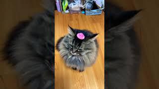 모자쓴 고양이