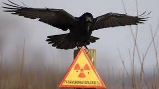 Чернобыль ● Цепная реакция ● Док. фильм ●