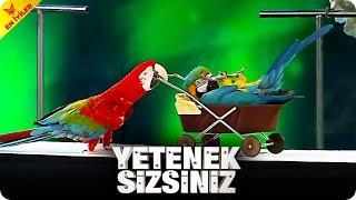 Kalovan Yavashev ve Dünyanın En Zeki Papağanları - Yetenek Sizsiniz Türkiye Efsaneleri