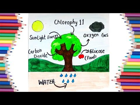 """HOW TO DRAW THE PROCESS OF  """"PHOTOSYNTHESIS """" FOR KIDS"""