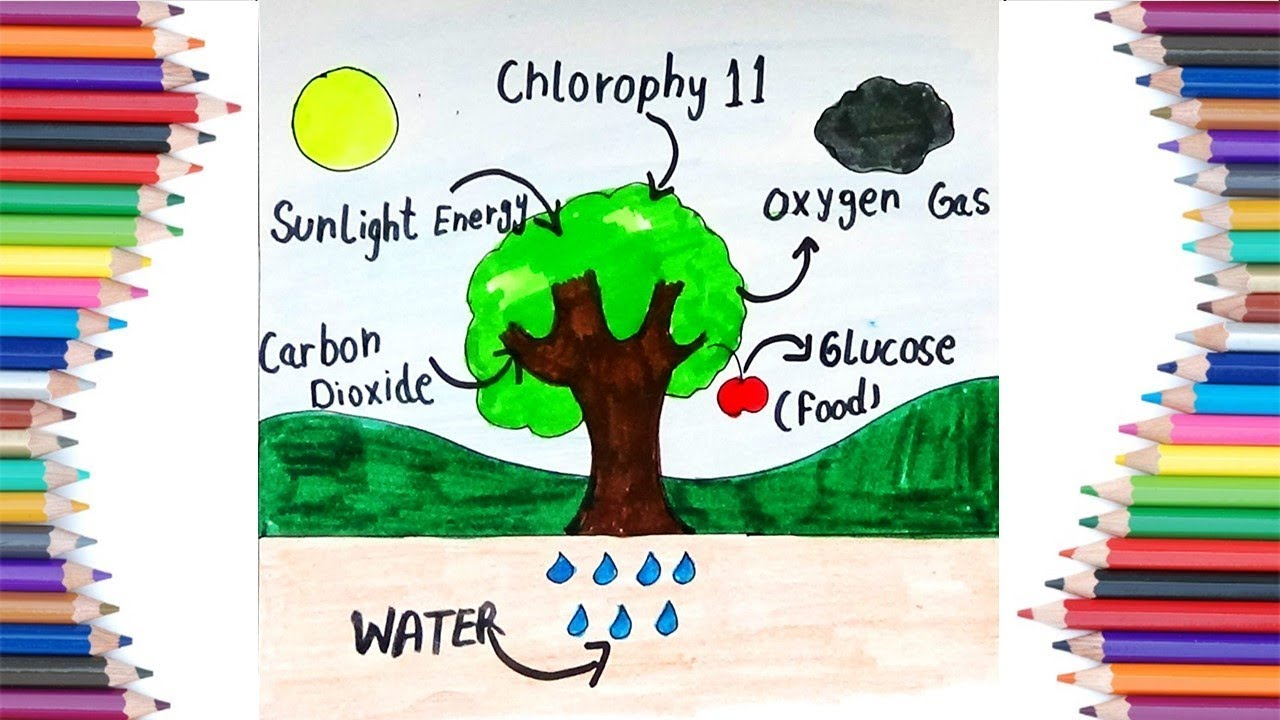 How to draw the process of photosynthesis for kids youtube how to draw the process of photosynthesis for kids ccuart Images