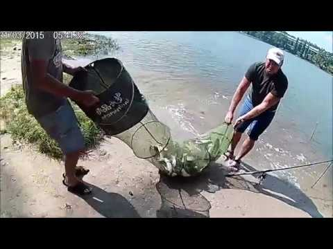 видео как бы обнаруживать пеленгаса